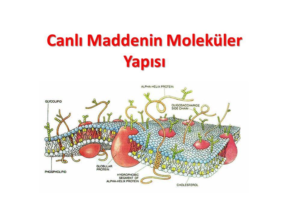Canlı Maddenin Moleküler Yapısı