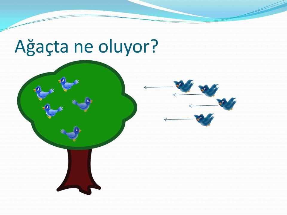 Ağaçta ne oluyor?