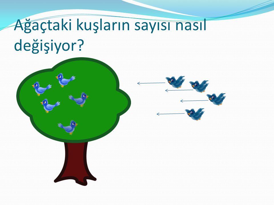 Ağaçtaki kuşların sayısı nasıl değişiyor?