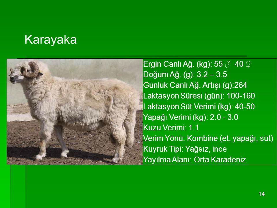 14 Ergin Canlı Ağ. (kg): 55 ♂ 40 ♀ Doğum Ağ. (g): 3.2 – 3.5 Günlük Canlı Ağ. Artışı (g):264 Laktasyon Süresi (gün): 100-160 Laktasyon Süt Verimi (kg):