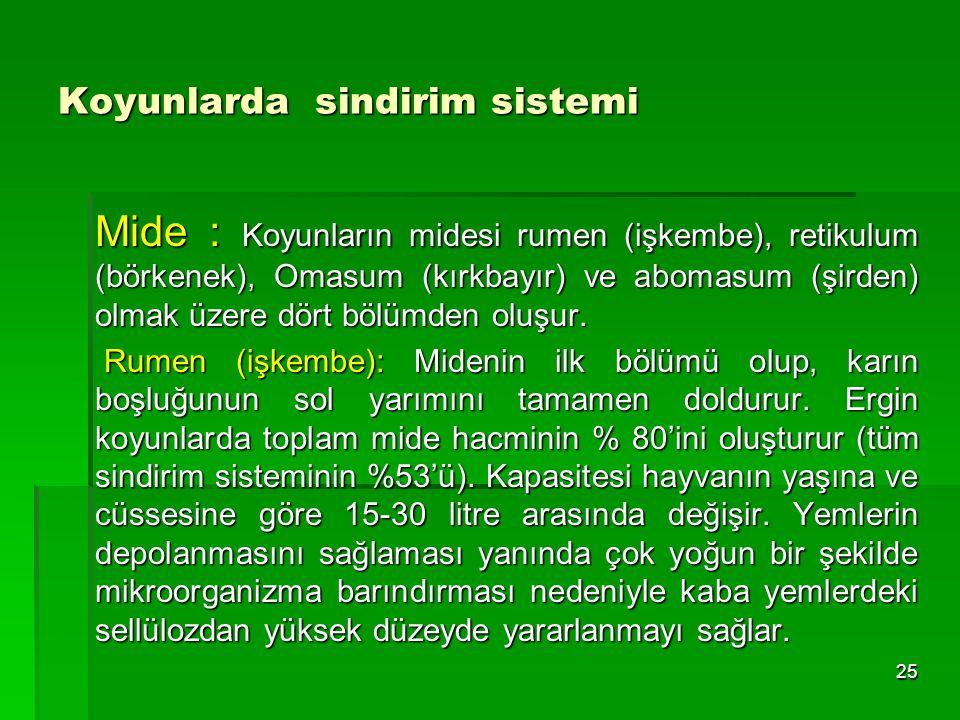 Koyunlarda sindirim sistemi Mide : Koyunların midesi rumen (işkembe), retikulum (börkenek), Omasum (kırkbayır) ve abomasum (şirden) olmak üzere dört b
