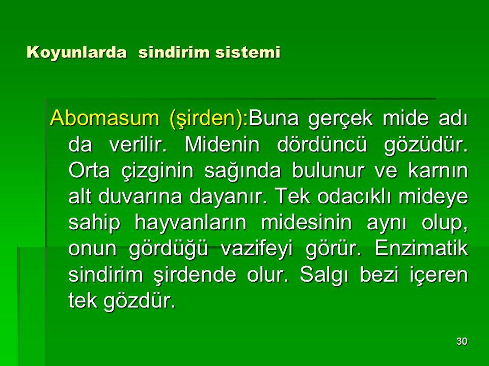Koyunlarda sindirim sistemi Abomasum (şirden):Buna gerçek mide adı da verilir. Midenin dördüncü gözüdür. Orta çizginin sağında bulunur ve karnın alt d
