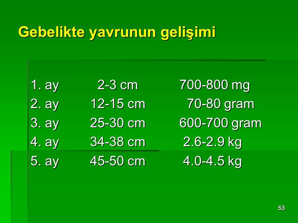 53 Gebelikte yavrunun gelişimi 1. ay 2-3 cm700-800 mg 2. ay12-15 cm 70-80 gram 3. ay 25-30 cm600-700 gram 4. ay 34-38 cm 2.6-2.9 kg 5. ay 45-50 cm 4.0