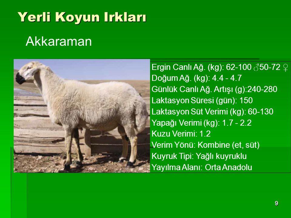Yerli Koyun Irkları 9 Ergin Canlı Ağ. (kg): 62-100 ♂50-72 ♀ Doğum Ağ. (kg): 4.4 - 4.7 Günlük Canlı Ağ. Artışı (g):240-280 Laktasyon Süresi (gün): 150