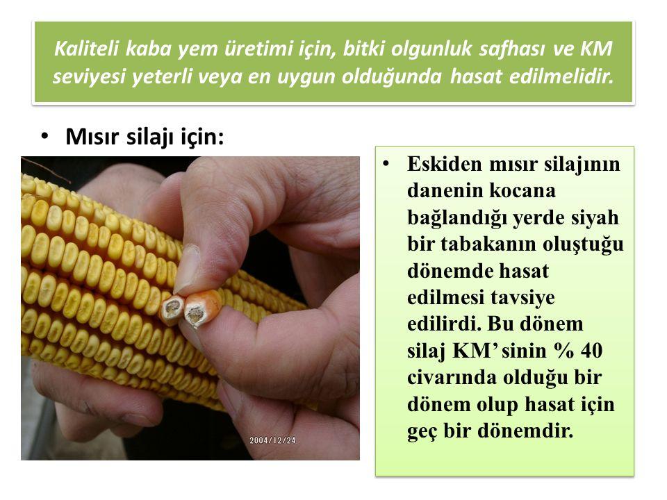 Kaliteli kaba yem üretimi için, bitki olgunluk safhası ve KM seviyesi yeterli veya en uygun olduğunda hasat edilmelidir. Mısır silajı için: Eskiden mı