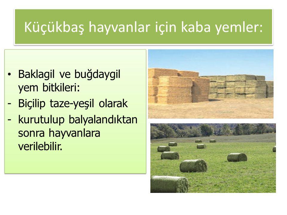 Küçükbaş hayvanlar için kaba yemler: Baklagil ve buğdaygil yem bitkileri: -Biçilip taze-yeşil olarak -kurutulup balyalandıktan sonra hayvanlara verile