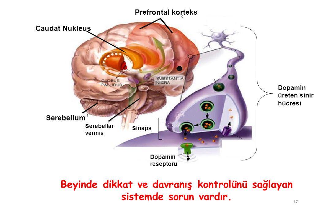 17 Caudat Nukleus Prefrontal korteks Serebellum Dopamin üreten sinir hücresi Dopamin reseptörü Sinaps Serebellar vermis Beyinde dikkat ve davranış kon
