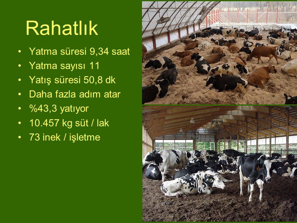 Rahatlık Yatma süresi 9,34 saat Yatma sayısı 11 Yatış süresi 50,8 dk Daha fazla adım atar %43,3 yatıyor 10.457 kg süt / lak 73 inek / işletme