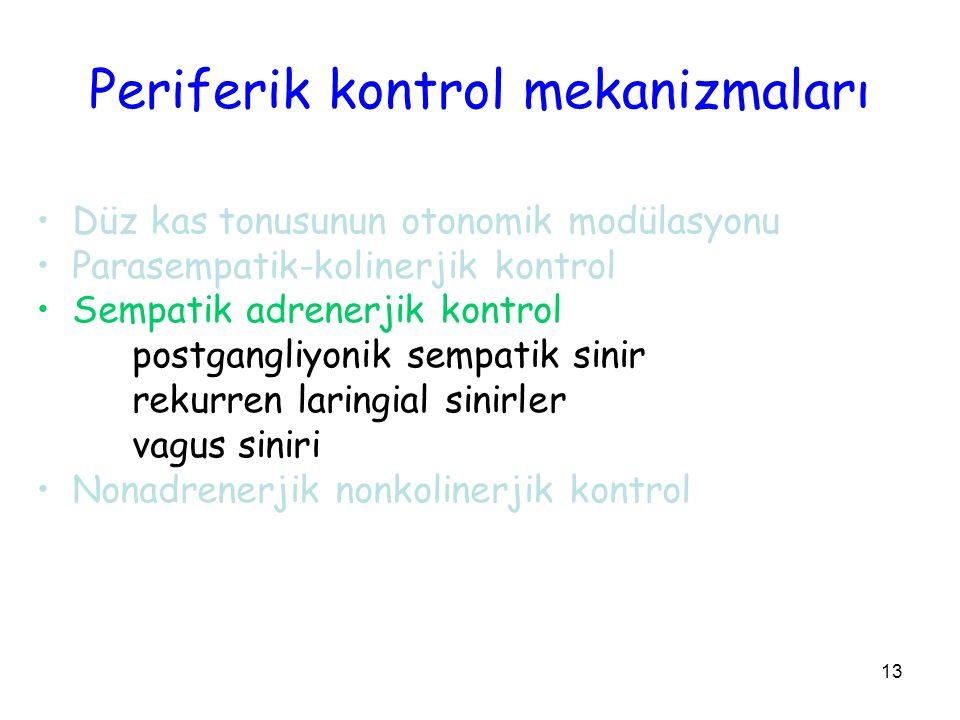 13 Periferik kontrol mekanizmaları Düz kas tonusunun otonomik modülasyonu Parasempatik-kolinerjik kontrol Sempatik adrenerjik kontrol postgangliyonik sempatik sinir rekurren laringial sinirler vagus siniri Nonadrenerjik nonkolinerjik kontrol