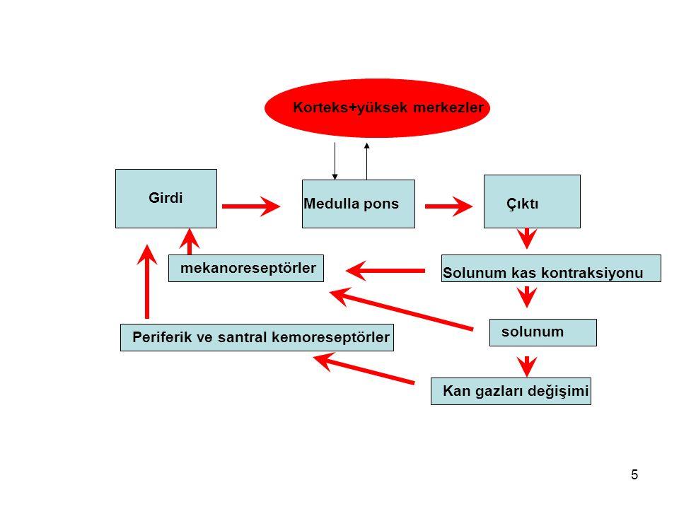 5 Korteks+yüksek merkezler Girdi Medulla ponsÇıktı Solunum kas kontraksiyonu solunum Kan gazları değişimi Periferik ve santral kemoreseptörler mekanoreseptörler