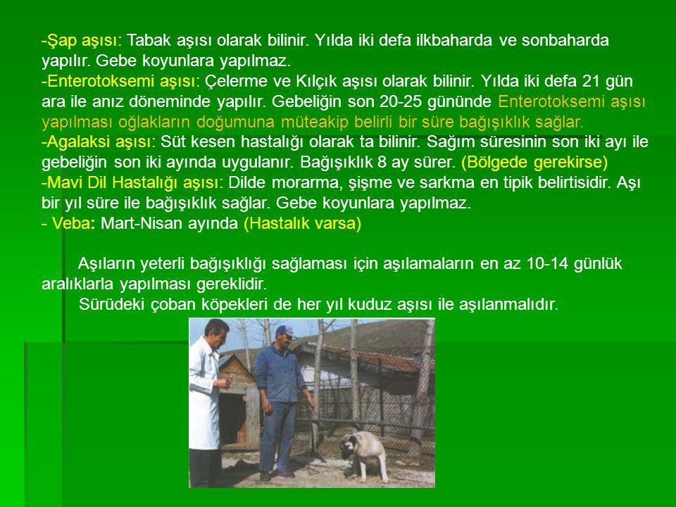 -Şap aşısı: Tabak aşısı olarak bilinir. Yılda iki defa ilkbaharda ve sonbaharda yapılır. Gebe koyunlara yapılmaz. -Enterotoksemi aşısı: Çelerme ve Kıl