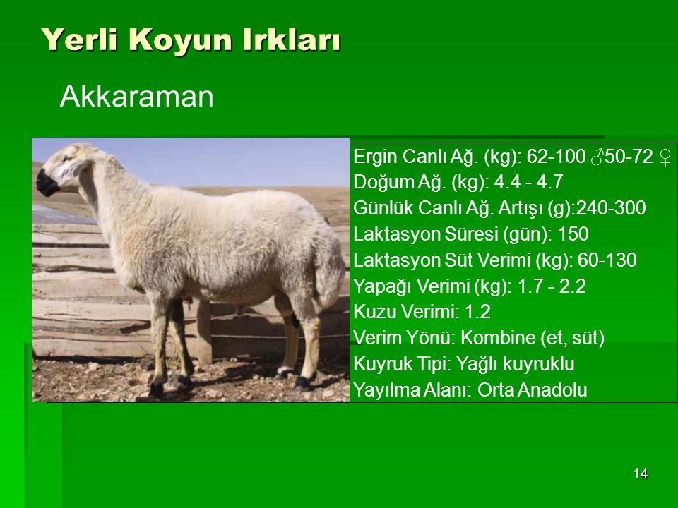 Yerli Koyun Irkları 14 Ergin Canlı Ağ. (kg): 62-100 ♂50-72 ♀ Doğum Ağ. (kg): 4.4 - 4.7 Günlük Canlı Ağ. Artışı (g):240-300 Laktasyon Süresi (gün): 150