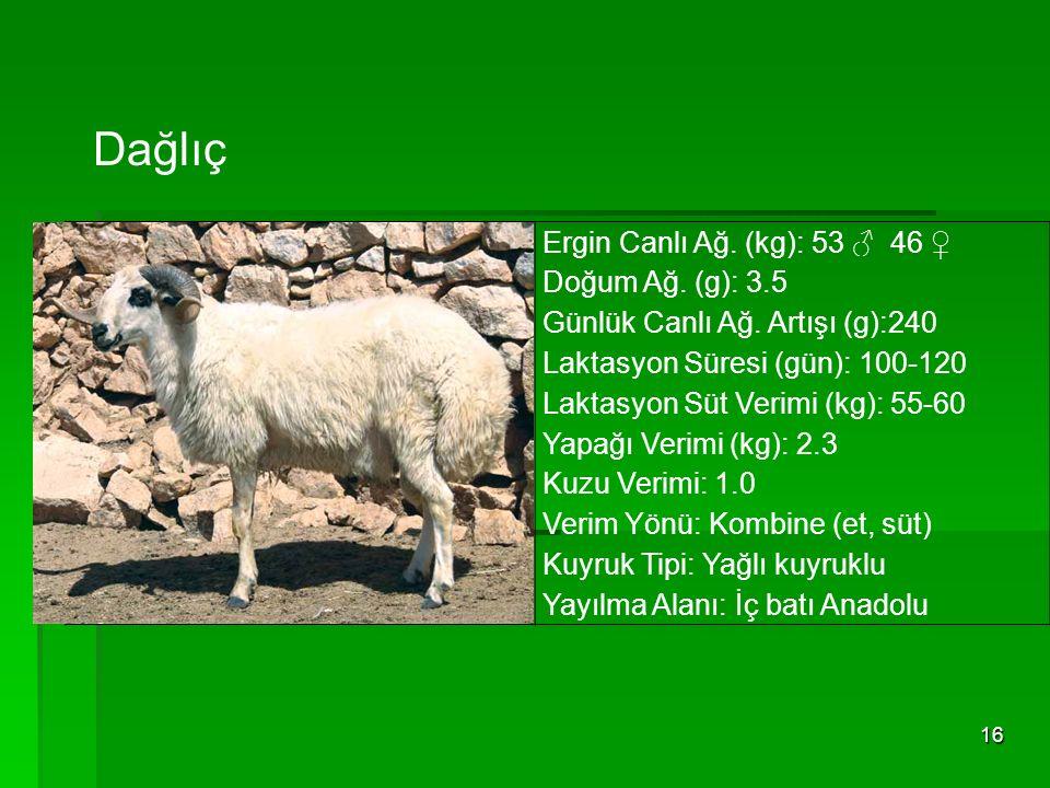 16 Ergin Canlı Ağ. (kg): 53 ♂ 46 ♀ Doğum Ağ. (g): 3.5 Günlük Canlı Ağ. Artışı (g):240 Laktasyon Süresi (gün): 100-120 Laktasyon Süt Verimi (kg): 55-60