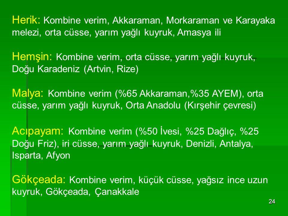 24 Herik: Kombine verim, Akkaraman, Morkaraman ve Karayaka melezi, orta cüsse, yarım yağlı kuyruk, Amasya ili Hemşin: Kombine verim, orta cüsse, yarım