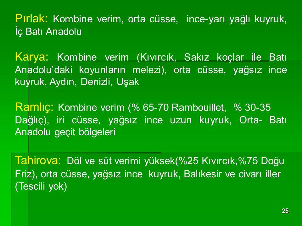 25 Pırlak: Kombine verim, orta cüsse, ince-yarı yağlı kuyruk, İç Batı Anadolu Karya: Kombine verim (Kıvırcık, Sakız koçlar ile Batı Anadolu'daki koyun