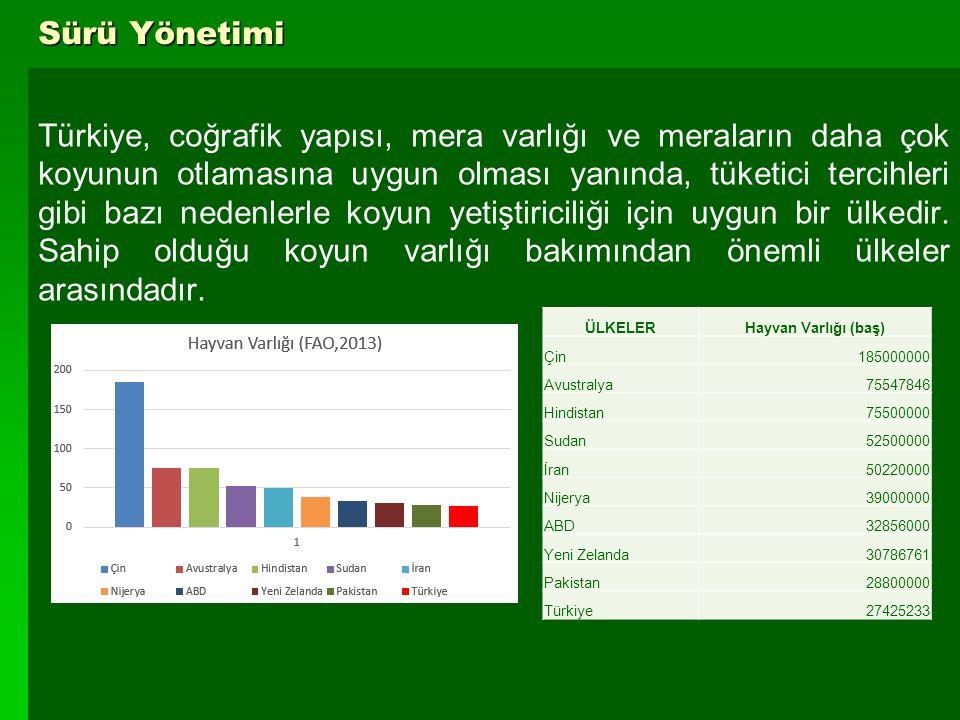 3 Sürü Yönetimi Türkiye, coğrafik yapısı, mera varlığı ve meraların daha çok koyunun otlamasına uygun olması yanında, tüketici tercihleri gibi bazı ne