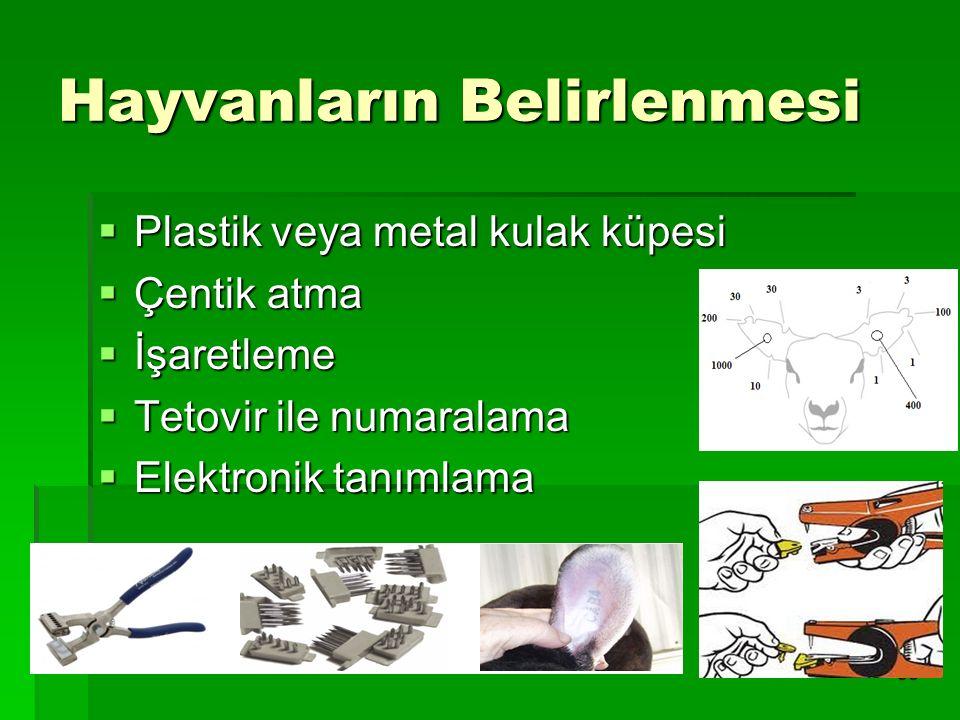 38 Hayvanların Belirlenmesi  Plastik veya metal kulak küpesi  Çentik atma  İşaretleme  Tetovir ile numaralama  Elektronik tanımlama