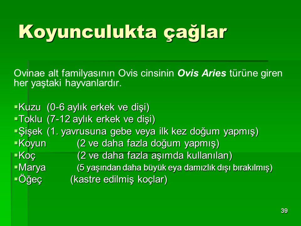 39 Koyunculukta çağlar Ovinae alt familyasının Ovis cinsinin Ovis Aries türüne giren her yaştaki hayvanlardır.  Kuzu (0-6 aylık erkek ve dişi)  Tokl