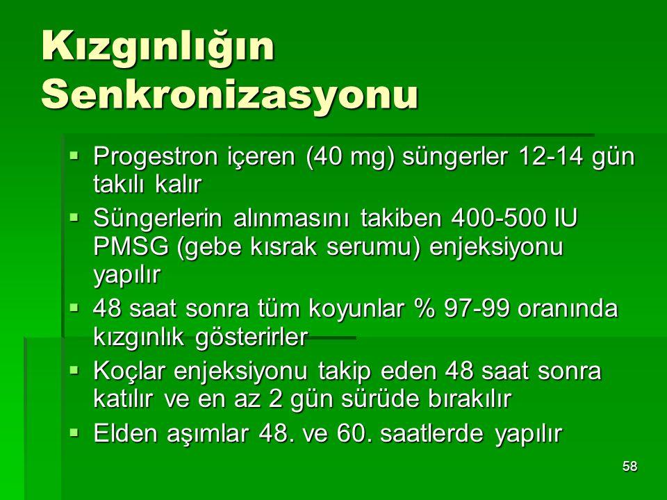 58 Kızgınlığın Senkronizasyonu  Progestron içeren (40 mg) süngerler 12-14 gün takılı kalır  Süngerlerin alınmasını takiben 400-500 IU PMSG (gebe kıs