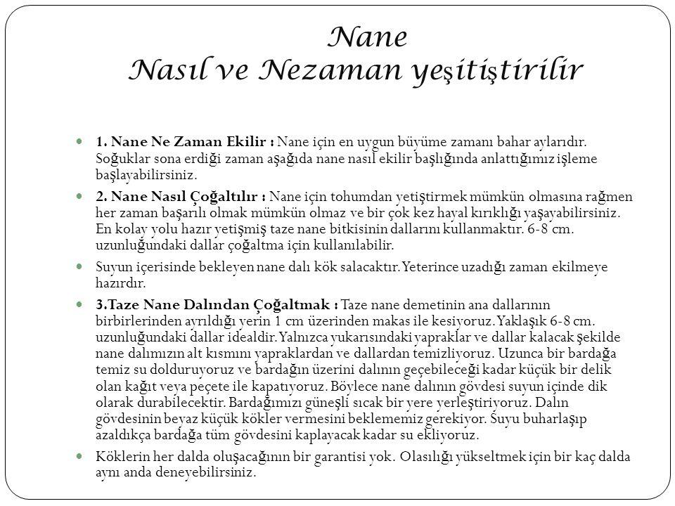 Nane Nasıl ve Nezaman ye ş iti ş tirilir 1.