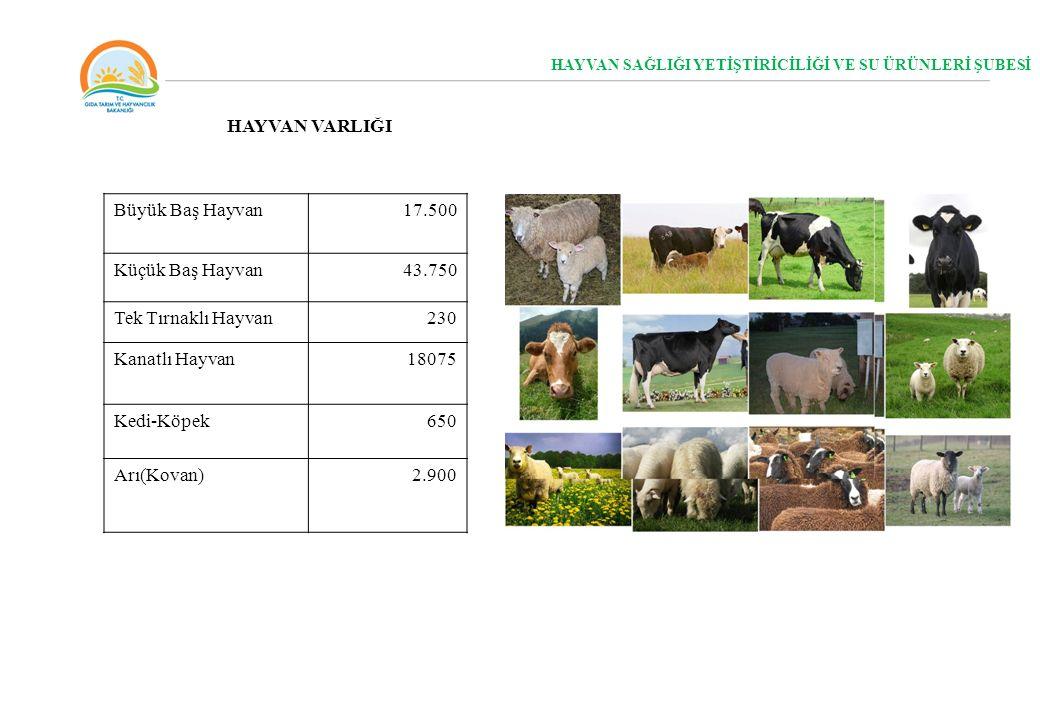 HAYVAN SAĞLIĞI YETİŞTİRİCİLİĞİ VE SU ÜRÜNLERİ ŞUBESİ Büyük Baş Hayvan17.500 Küçük Baş Hayvan43.750 Tek Tırnaklı Hayvan230 Kanatlı Hayvan18075 Kedi-Köp