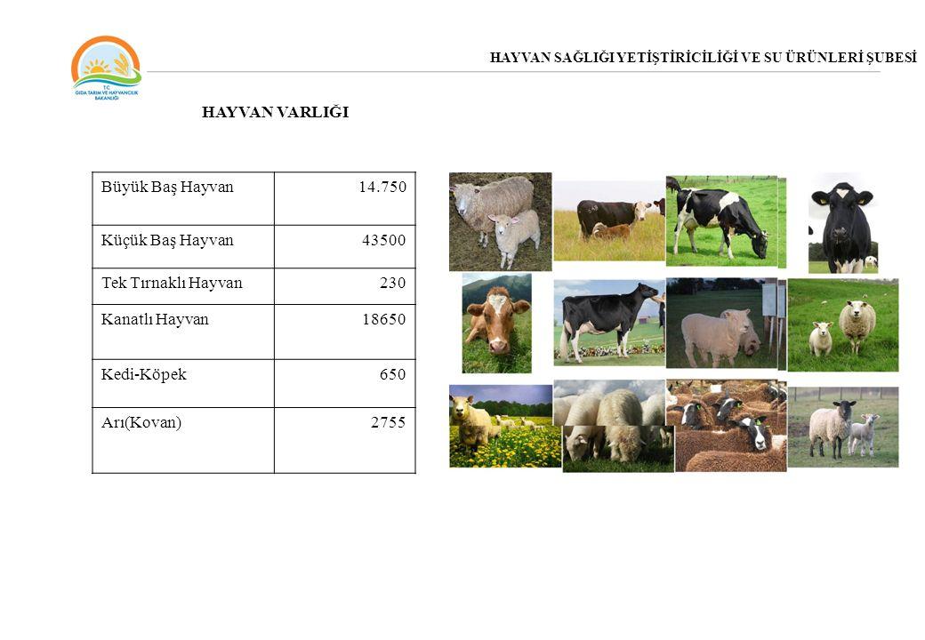 HAYVAN SAĞLIĞI YETİŞTİRİCİLİĞİ VE SU ÜRÜNLERİ ŞUBESİ Büyük Baş Hayvan14.750 Küçük Baş Hayvan43500 Tek Tırnaklı Hayvan230 Kanatlı Hayvan18650 Kedi-Köpe
