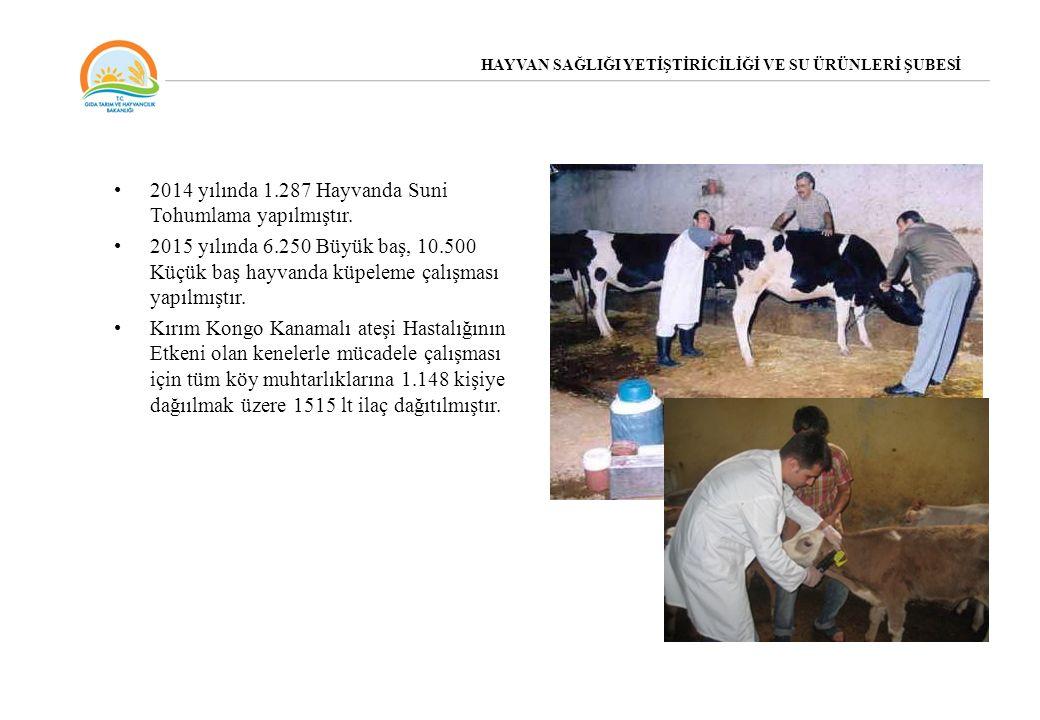 2014 yılında 1.287 Hayvanda Suni Tohumlama yapılmıştır. 2015 yılında 6.250 Büyük baş, 10.500 Küçük baş hayvanda küpeleme çalışması yapılmıştır. Kırım