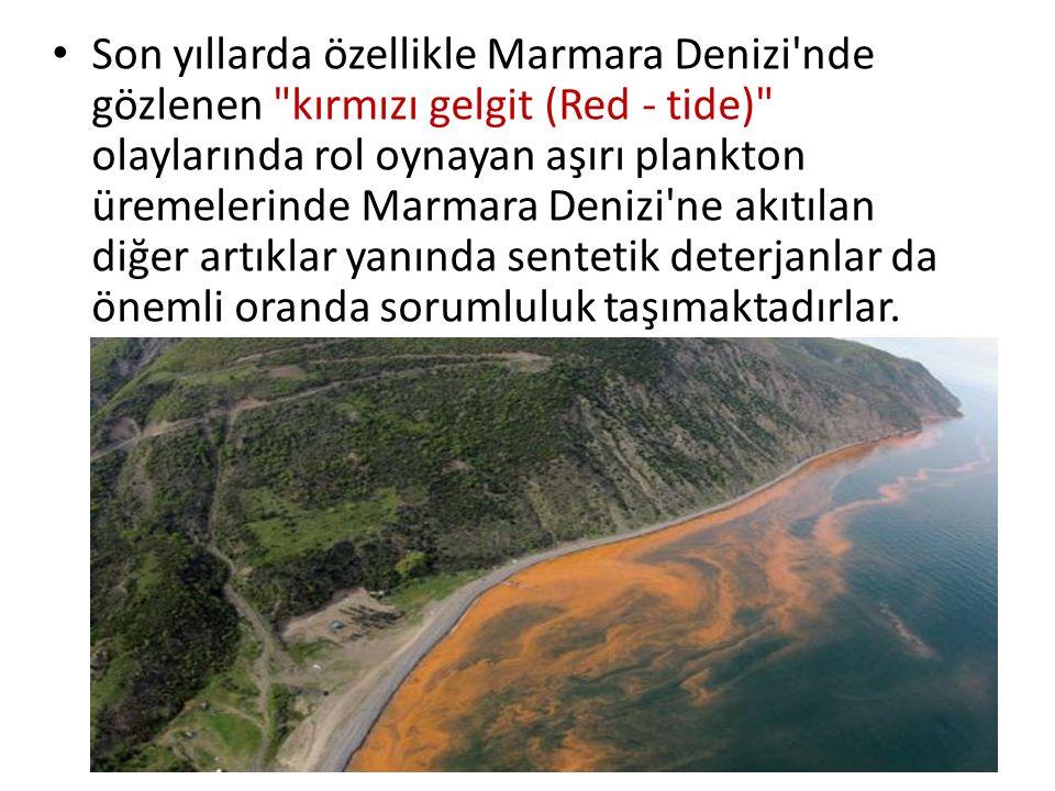 Son yıllarda özellikle Marmara Denizi'nde gözlenen