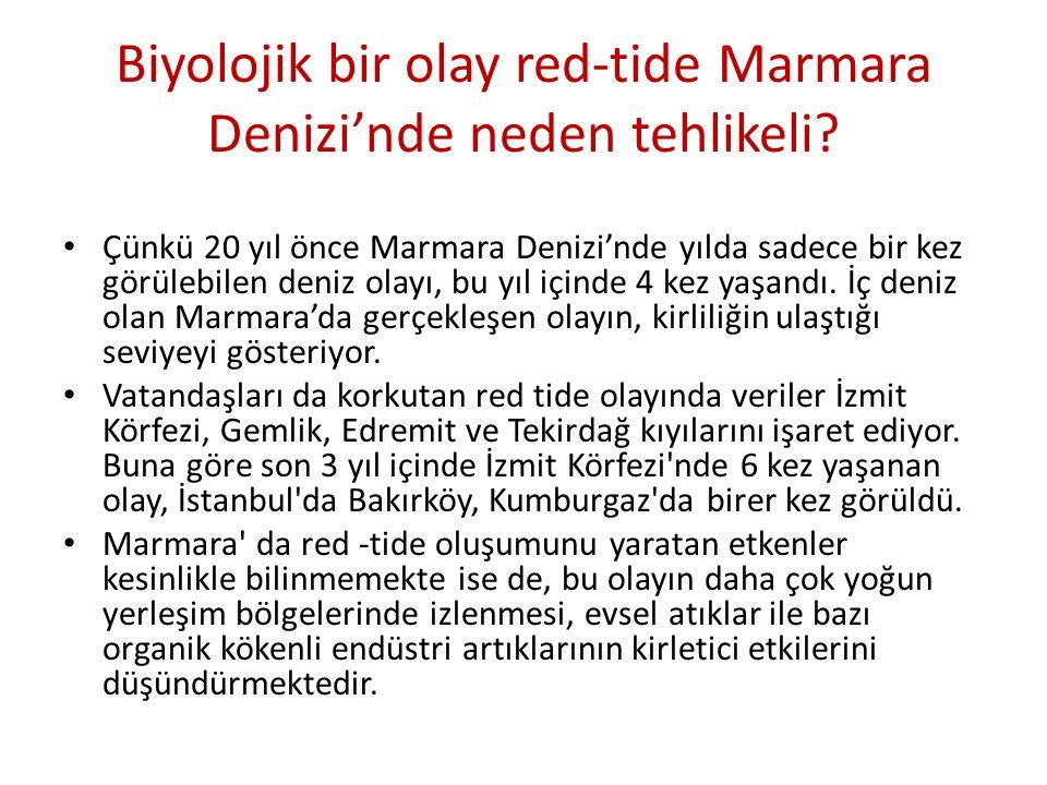 Biyolojik bir olay red-tide Marmara Denizi'nde neden tehlikeli? Çünkü 20 yıl önce Marmara Denizi'nde yılda sadece bir kez görülebilen deniz olayı, bu