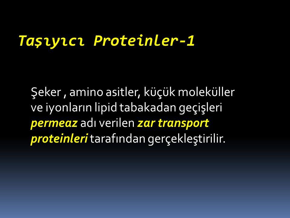 Taşıyıcı Proteinler-1 Şeker, amino asitler, küçük moleküller ve iyonların lipid tabakadan geçişleri permeaz adı verilen zar transport proteinleri tara