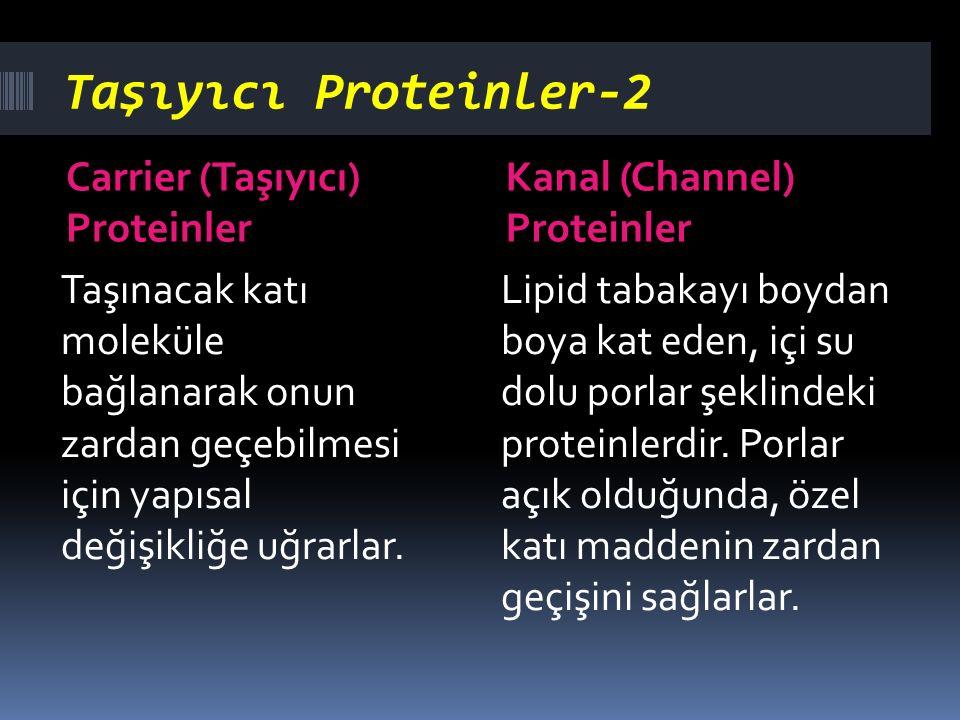 Taşıyıcı Proteinler-2 Carrier (Taşıyıcı) Proteinler Kanal (Channel) Proteinler Taşınacak katı moleküle bağlanarak onun zardan geçebilmesi için yapısal