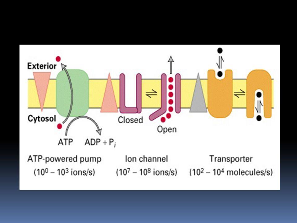 Sitoplazma ile hücreyi kuşatan çevre arasında konsantrasyon farkını korumaktır.