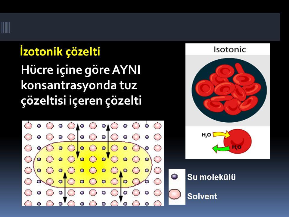 İzotonik çözelti Hücre içine göre AYNI konsantrasyonda tuz çözeltisi içeren çözelti Su molekülü Solvent