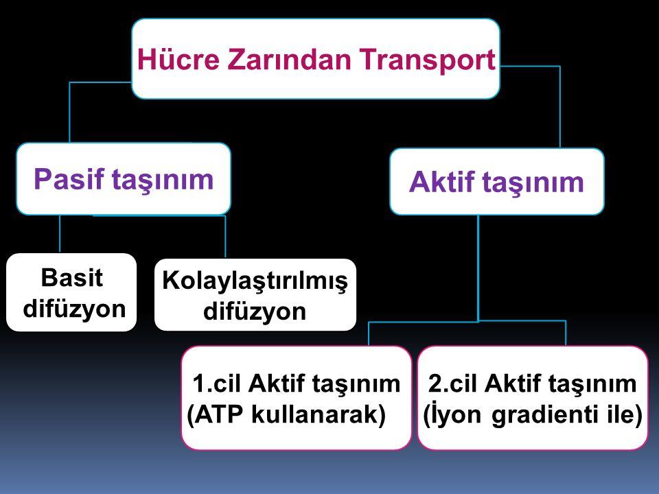 Hücre Zarından Transport Basit difüzyon Pasif taşınım Aktif taşınım 1.cil Aktif taşınım (ATP kullanarak) 2.cil Aktif taşınım (İyon gradienti ile) Kola