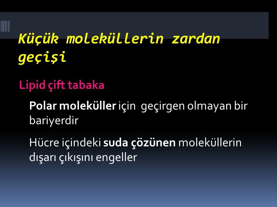 Küçük moleküllerin zardan geçişi Lipid çift tabaka Polar moleküller için geçirgen olmayan bir bariyerdir Hücre içindeki suda çözünen moleküllerin dışa