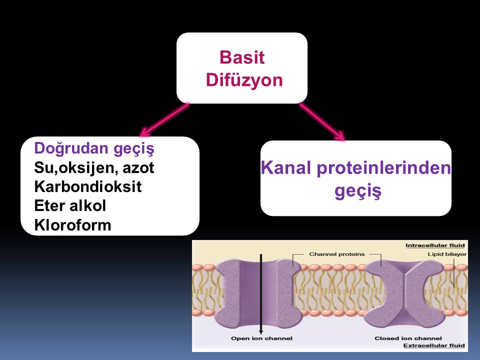 Doğrudan geçiş Su,oksijen, azot Karbondioksit Eter alkol Kloroform Kanal proteinlerinden geçiş Basit Difüzyon
