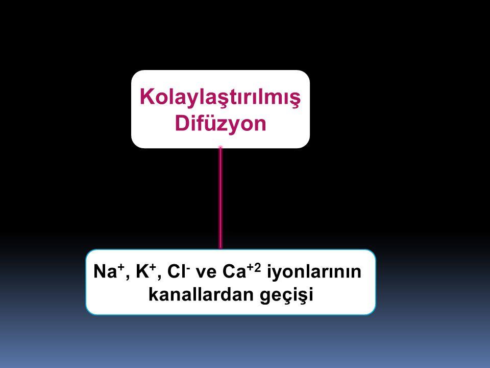 Kolaylaştırılmış Difüzyon Na +, K +, Cl - ve Ca +2 iyonlarının kanallardan geçişi