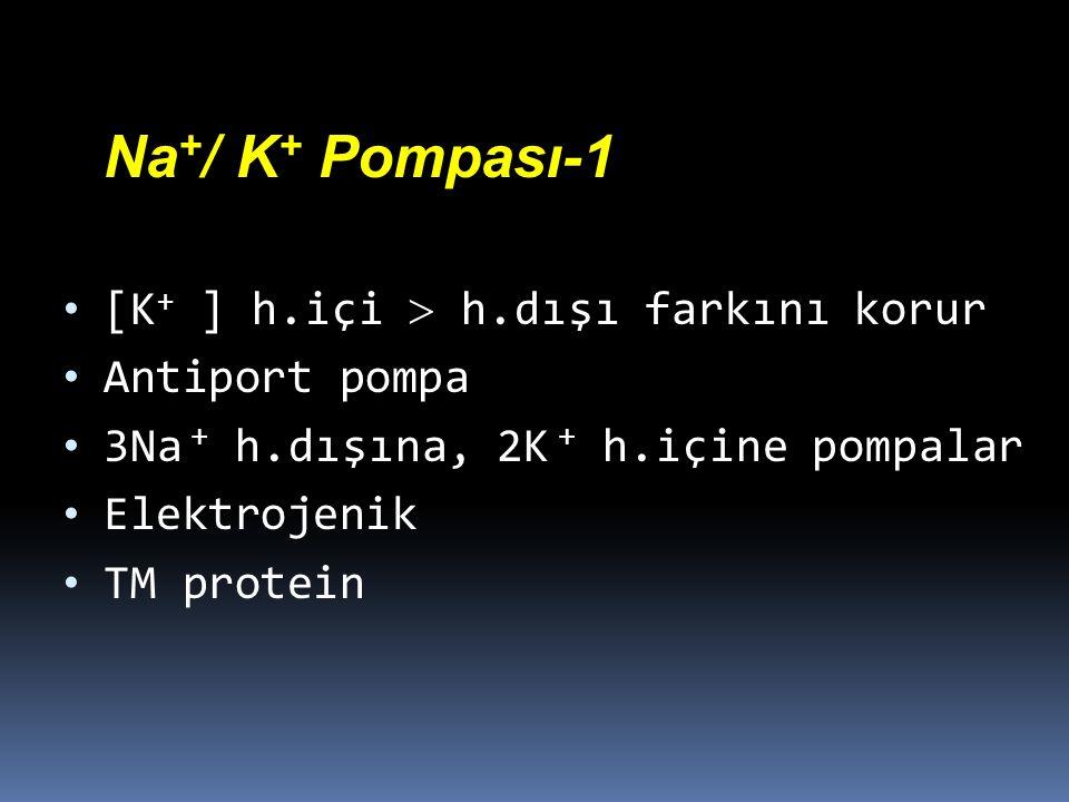 Na + / K + Pompası-1 [K + ] h.içi  h.dışı farkını korur Antiport pompa 3Na + h.dışına, 2K + h.içine pompalar Elektrojenik TM protein