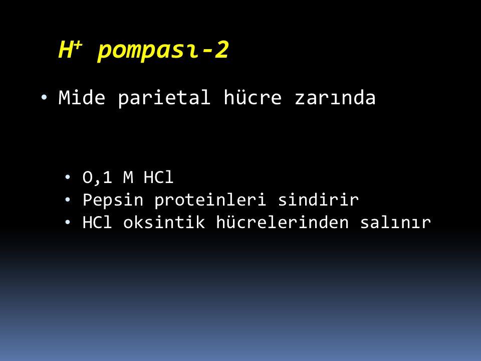 H + pompası-2 Mide parietal hücre zarında O,1 M HCl Pepsin proteinleri sindirir HCl oksintik hücrelerinden salınır