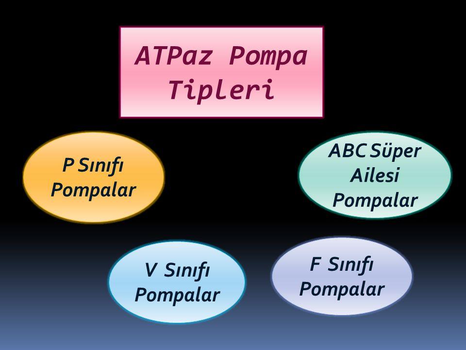 ATPaz Pompa Tipleri P Sınıfı Pompalar ABC Süper Ailesi Pompalar V Sınıfı Pompalar F Sınıfı Pompalar
