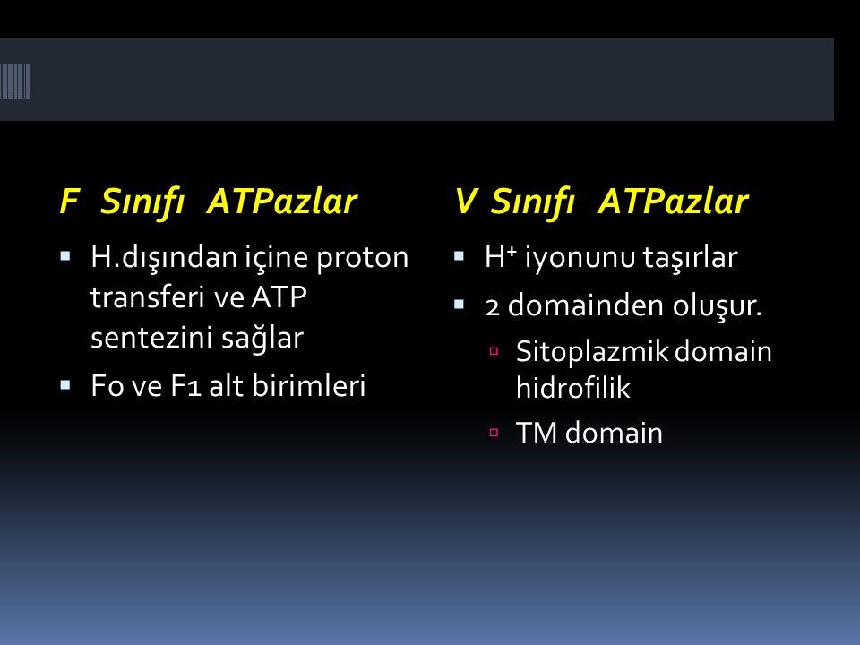 F Sınıfı ATPazlarV Sınıfı ATPazlar  H.dışından içine proton transferi ve ATP sentezini sağlar  Fo ve F1 alt birimleri  H + iyonunu taşırlar  2 dom