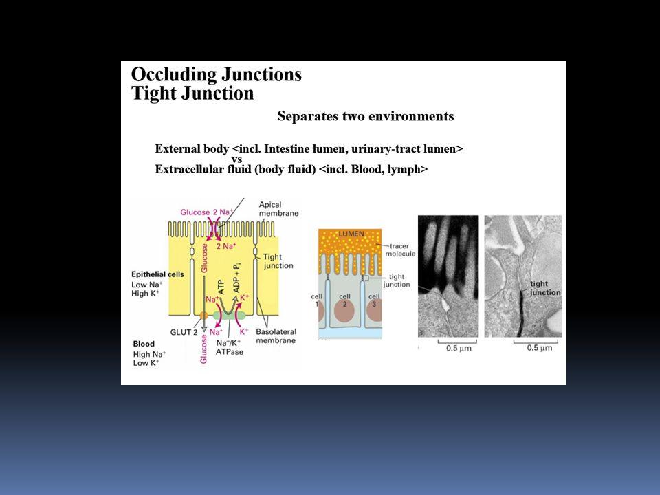 Grup Translokasyonu Bazı zarlarda taşınan maddeyi zorunlu kimyasal değişikliğe uğratan bir başka taşınım sistemi Örneğin, bakteri hücresinde Glukoz glikoz-6-P olarak taşınması
