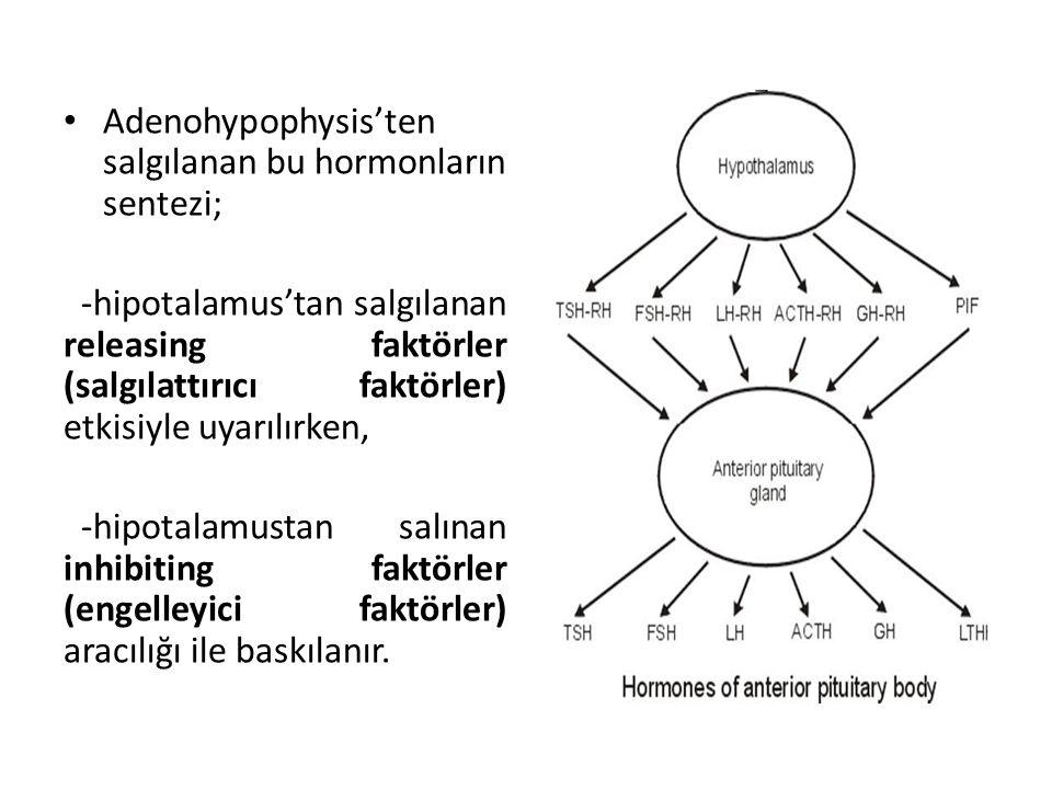 Adenohypophysis'ten salgılanan bu hormonların sentezi; -hipotalamus'tan salgılanan releasing faktörler (salgılattırıcı faktörler) etkisiyle uyarılırke