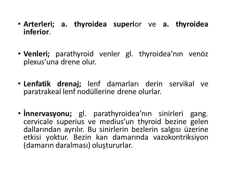 Arterleri; a. thyroidea superior ve a. thyroidea inferior. Venleri; parathyroid venler gl. thyroidea'nın venöz plexus'una drene olur. Lenfatik drenaj;