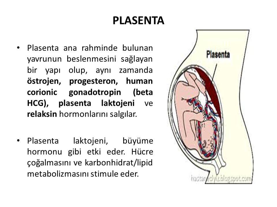 PLASENTA Plasenta ana rahminde bulunan yavrunun beslenmesini sağlayan bir yapı olup, aynı zamanda östrojen, progesteron, human corionic gonadotropin (