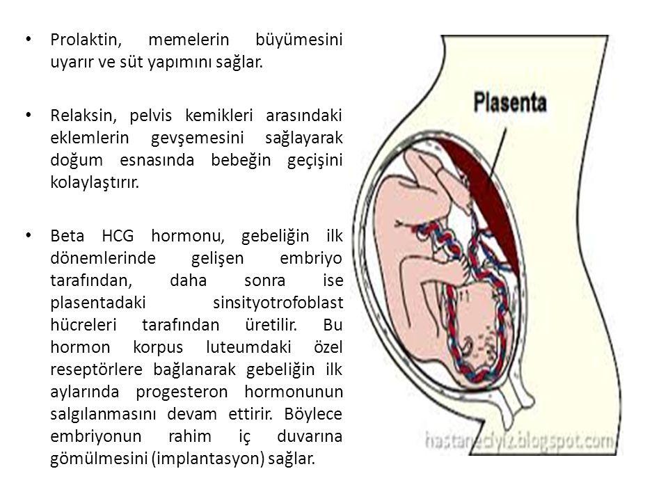 Prolaktin, memelerin büyümesini uyarır ve süt yapımını sağlar. Relaksin, pelvis kemikleri arasındaki eklemlerin gevşemesini sağlayarak doğum esnasında