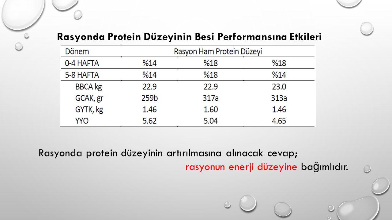 Rasyonda protein düzeyinin artırılmasına alınacak cevap; rasyonun enerji düzeyine ba ğ ımlıdır. Rasyonda Protein Düzeyinin Besi Performansına Etkileri