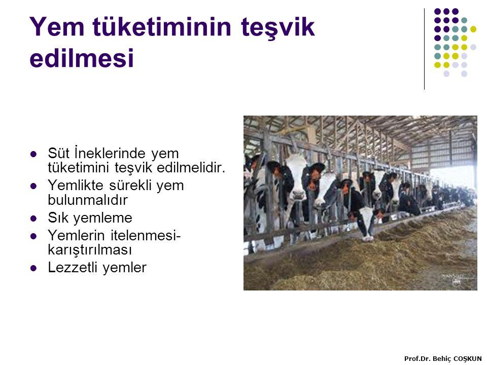 Yem tüketiminin teşvik edilmesi Süt İneklerinde yem tüketimini teşvik edilmelidir.