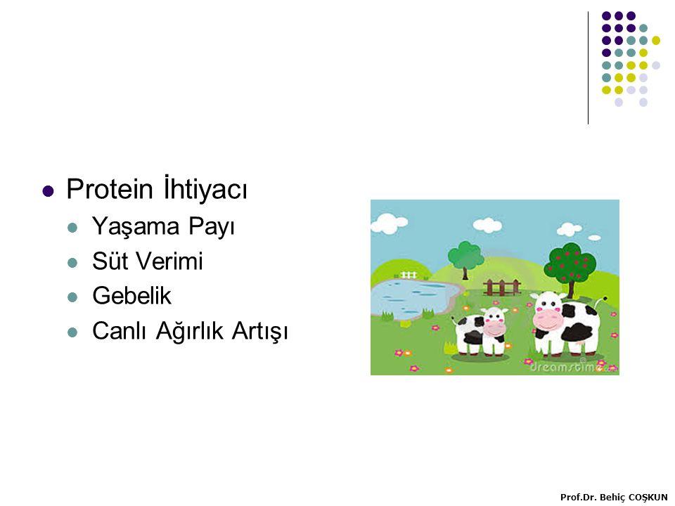 Protein İhtiyacı Yaşama Payı Süt Verimi Gebelik Canlı Ağırlık Artışı Prof.Dr. Behiç COŞKUN