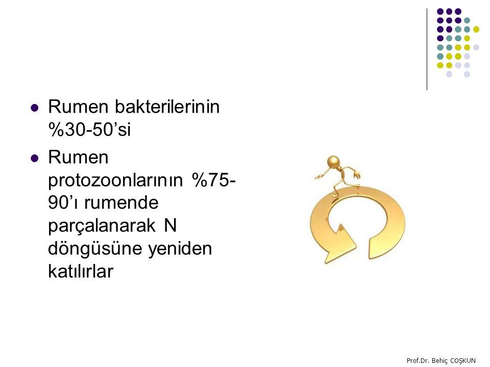 Rumen bakterilerinin %30-50'si Rumen protozoonlarının %75- 90'ı rumende parçalanarak N döngüsüne yeniden katılırlar Prof.Dr.